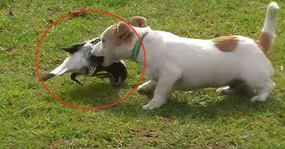 Zuerst dachten alle, der Hund attackiert diesen Vogel - doch dann bemerkten sie DAS!