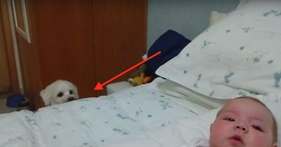 Dieser Hund sieht zum ersten Mal ein Baby - Seine Reaktion: unschlagbar!