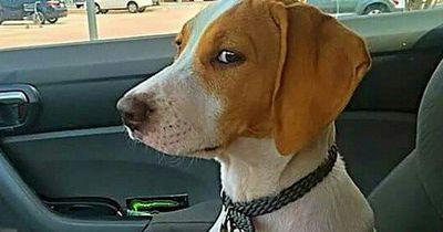 Diese Hunde fahren zum Tierarzt - Ihre Gesichter: einmalig!