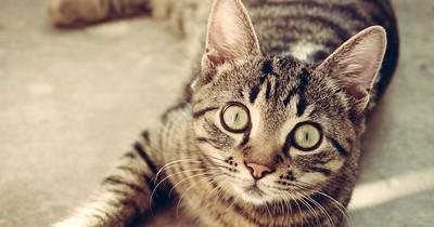 Die 7 häufigsten Fehler bei der Katzenerziehung