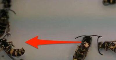 Die Plage wird noch schlimmer! DARUM solltet ihr Wespen NIEMALS töten!