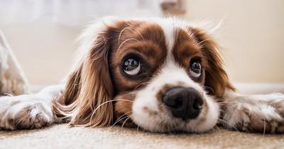 Welche Hunderasse ist dir am ähnlichsten?