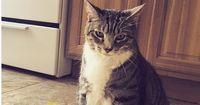 5 Gründe, warum Katzen einfach unschlagbar sind