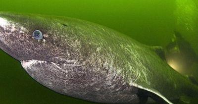 Dieses Wesen lebt tatsächlich in unserem Meer!