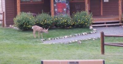 Bambi und Klopfer leben!