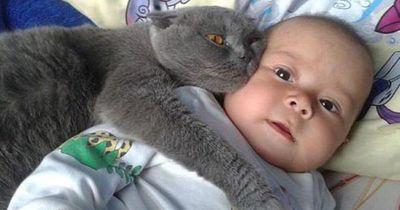 Als der Vater sein Baby schlägt, denkt die Katze nicht 2 mal nach! Sie attackiert den Angreifer!