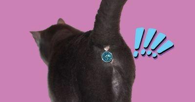 Ein Glitzer-Po für die Katze