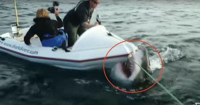 Zu zweit im kleinen Boot waren sie machtlos gegen dieses Tier