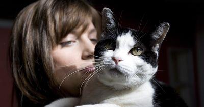 Das sind die 5 beliebtesten Katzen-Namen!