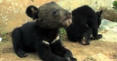 Diese zwei Bärenbabys irrten alleine in der Wildnis herum