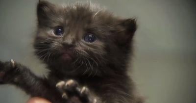 Katzenbaby wird in Londoner U-Bahn ausgesetzt