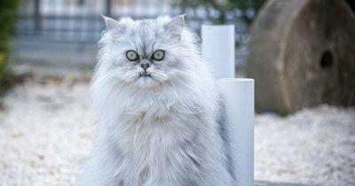 Katzen hassen diese 5 Dinge!
