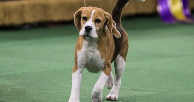 5 Todsünden der Hunde-Erziehung