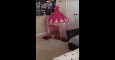 Sie bekommt ein eigenes Prinzessinnen-Schloss und reagiert einfach genial!