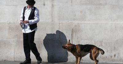 5 Tipps, damit die Begegnung zwischen zwei Hunden friedlich verläuft