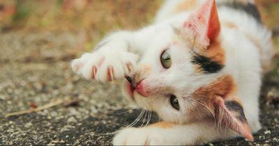 So erziehst du deine Katze