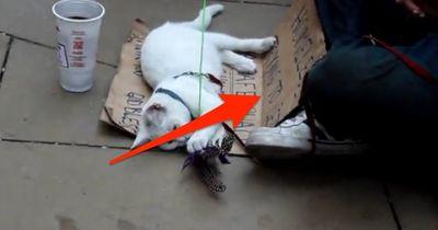 Er opfert sein gesamtes Leben für diese Katze. Das macht sie für ihn!