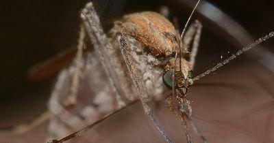 Darum stechen dich Mücken