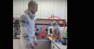 Nach diesem Video wirst du Katzen anders sehen!