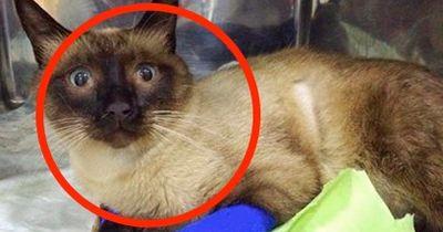 Sie ist blind und wurde von ihren Besitzern aus dem Fenster geworfen.
