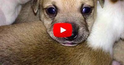 Diese beiden Chihuahuas wurden gerettet. Doch was dann passierte, damit hat keiner gerechnet.