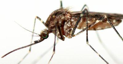 Mit DIESER Blutgruppe habt ihr sicherlich keine Chance bei den Mücken!