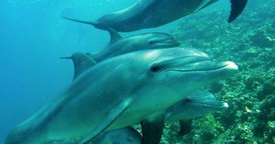 Warum Delphine im Schlaf nur ein Auge schließen