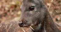 Diese Tiere sehen unreal aus - sie existieren trotzdem!