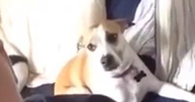 Was dieser Hund in 3 Sekunden tut, ist einfach nur genial :-D