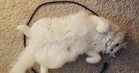 So fängst du deine Katze ein - in nur drei Schritten