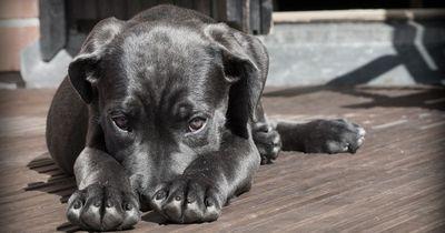5 Dinge, die du bedenken solltest, bevor du dir einen Hund anschaffst!