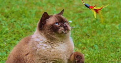 5 Dinge, die jede Katze braucht