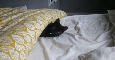 7 Katzen, die dein Bett klauen!