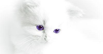 Überraschende Fakten über Katzen