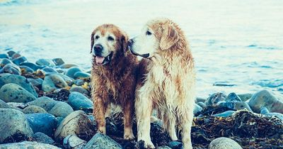 5 Mythen über Hunde, die du besser nicht glauben solltest!