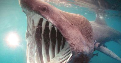 Was du über Haie unbedingt wissen solltest