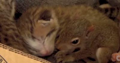 Bedingungslose Liebe: Katzenmama kümmert sich um einen Sprössling, der vom Himmel regnete!