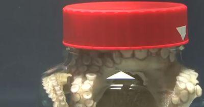 Octopus in Glas eingesperrt