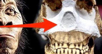 Sensationelle Funde in Südafrika: Was ist das für ein Wesen?