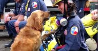 Dieser Hund war ein Held des 11. September - Das ist er heute...