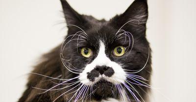 Diese Katzen sind ganz schön verwirrt!