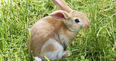 Wie bekommt man einen Hasen stubenrein?