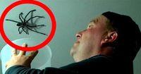 Vater versucht gigantische Spinne zu fangen