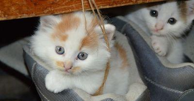 Die Top 5 Katzennamen in Deutschland!