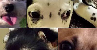 Diese 7 Mischlinge habt ihr noch nicht gesehen!