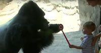 Dieser Gorilla liebt Menschen!