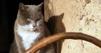 Diese Katze muss wirklich hungrig sein!