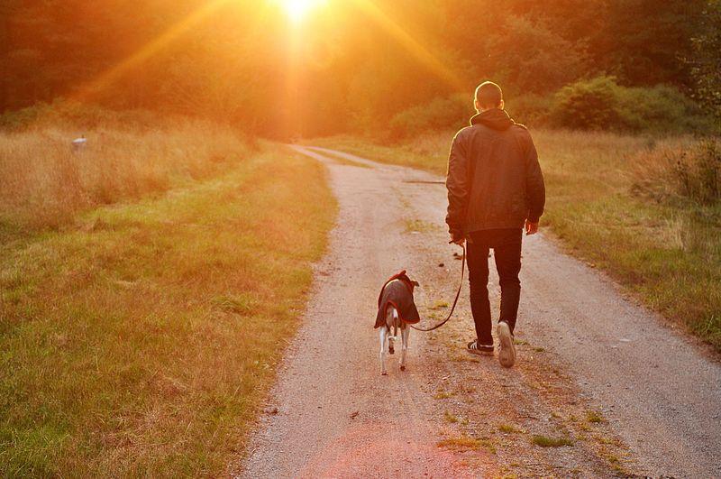 Was wäre, wenn du ein Hund wärst? So wäre dein Leben dann!