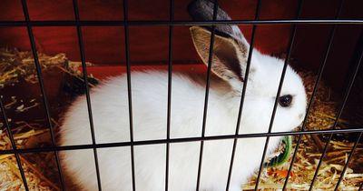 Schütze dein Kaninchen vor dem Tod