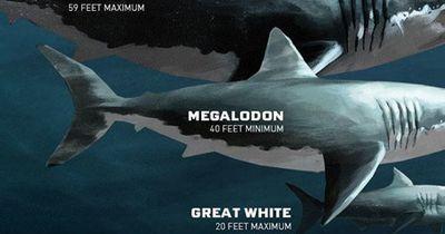 Die größten Tiere, die es jemals gab!!